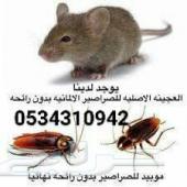شركة مكافحة حشرات رش مبيدات نمل ابيض رش دفان