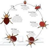 شركة رش مبيدات ومكافحة الحشرات بجدة ومكة