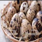 بيض سمان مخصب بأمر الله