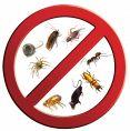 رش مبيدات ومكافحة حشرات مع الضمان بتبوك السعر