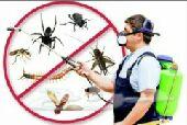 شركه مكافحة الحشرات والعته وغسيل الخزنات بمكه