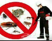 شركة رش الحشرات ومكافحة جميع الحشرات بالمدينة
