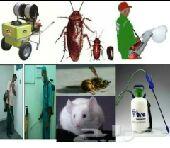 شركة نظافة الفلل  مكافحه جميع انواع الحشرات
