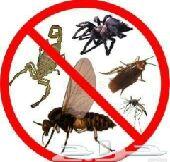 شركة مكافحة الحشرات بالمدينه المنورة