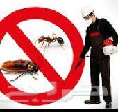 شركة مكافحة الحشرات بالمدينة رش حشرات المدينة