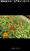 مشاتل زهور البستان