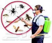 شركة رش مبيدات الباعوض النامس الذباب الصراصير