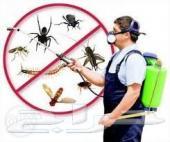 شركة رش مبيدات النمل الصراصير البق الفئران