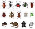 شركة الامل لمكافحة الحشرات