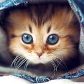 مجموعة واتساب لمربي القطط
