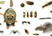 شركة مكافحة حشرات بالدمام الخبر القطيف الجبيل