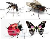 شركة رش مبيدات مكافحة حشرات نمل بق صراصير