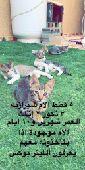 لتبني خمس قطط