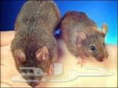 شركة مكافحة حشرات مكافحة البق الصراصير فئران