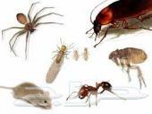 تنظيف منازل خزانات كنب موكيت رش مبيد حشرات
