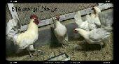 طقمين فيومي المنيوم بياض (تم البيع)