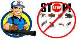 شركة مكافحة حشرات ونظافه عامه