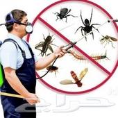 شركة مكافحة حشرات بجدة رش حشرات بجدة