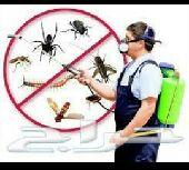 شركة مكافحة جميع أنواع الحشرات بالمدينه المنو