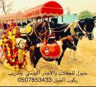 الشرقيه -  خيول