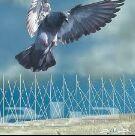 تركيب مانع الطيور وطارد الحمام بجده