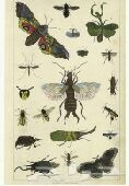 شركة مكافحة حشرات باالمدينةالمنورة