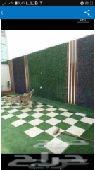 تنسيق الحدائق عبدالرحمن 0553838296