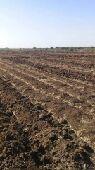مزرعه مع النيل مساحته 8 فدان للبيع صك