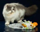 لهوواةة القطط