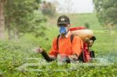 رش مبيدات رش مكافحة البعوض