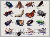 شركة مكافحة حشرات النمل البق الصراصير الفئران
