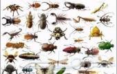 شركة مكافحة الحشرات في الرياض مكافحة الصراصير