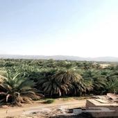 مزرعه للبيع بالمدينه حي الزهرة شمال المدينه