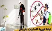 شركة رش مبيدات مكافحة حشرات مكافحة النمل