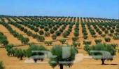 مشرف سعودي  زراعي للمشاريع والمزارع