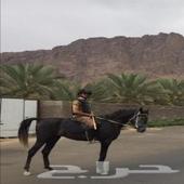 خيل عربي أصيل للبيع موقعه اصطبل العيون