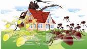 شركة رش مبيدات حشريه بالرياض - شركة مكافحة حشرات - شركة رش مبيد  - القضاء علي جميع الحشرات بالضمان