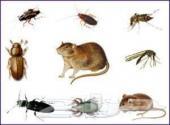 غسيل خزانات وشق ومسابح رش مبيدات