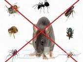 رش مبيدات مكافحة حشرات صراصير نمل وزغ فئران