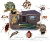 شركة رش حشرات نظافة عامه رش مبيدات السعر