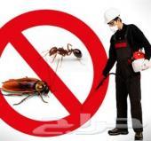 شركة مكافحة النمل الابيض بالطائف رش مبيدات