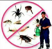 شركةمكافحةحشرات بجدةوغسيل خزانات بجدة