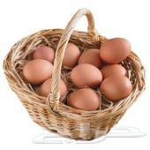 بيض بوليش عرض خاص