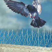 شركة طارد حمام تركيب شبك اشوك مكافحة الطيور