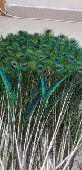 ريش طاووس للبيع