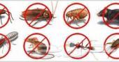 مكافحة حشرات مكافحة حشرات مكافحة حشرات