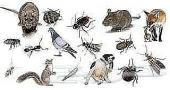 مكافحة الحشرات بالضمان رش مبيد ألماني بالرياض