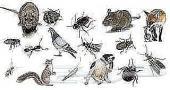شركة تنظيف منازل ورش مبيد الحشرات بالضمان