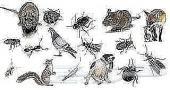 شركة الياسمين للنظافة العامة ومكافحة الحشرات
