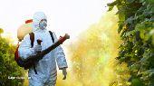 شركة مكافحة حشرات رش مبيدات بالطائف